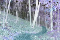 Foggy Trail Sawnee Mountain - Negative