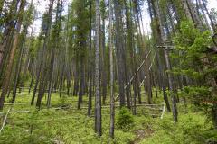 Montana Wooded Hillside