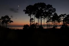 Treeline During Beach Sunset