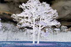 Tree Outstanding in its Field - Negative