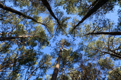 Look Up to Circle of Trees