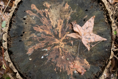 Tree Stump Fall Pattern - Sqaure