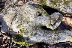 Baby Elephant Root