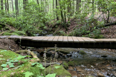 Wooden Creek Crossing