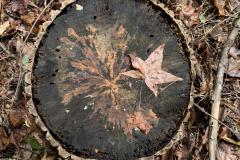 Tree Stump Fall Pattern