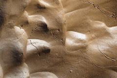 Sandy Trails