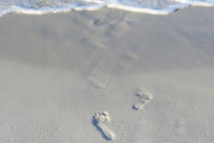 Beach Footprints Lead to Water