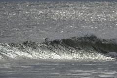 Silver Wave Rolls