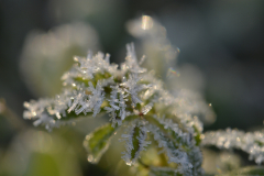 Leaves of Frost 5