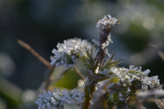 Leaves of Frost 8