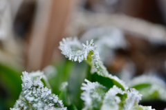 Leaves of Frost 2