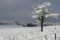 Snow Covered Pasture with Tree
