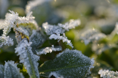 Leaves of Frost 3