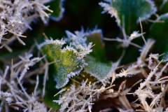 Leaves of Frost 4
